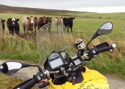 Waiting gang at Orkney Islands