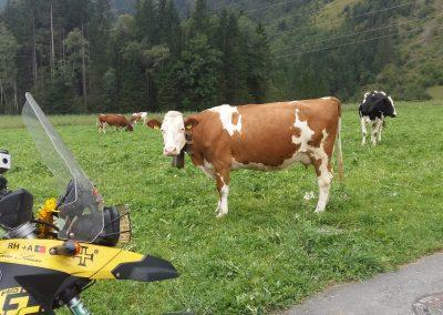 Swiss Milka