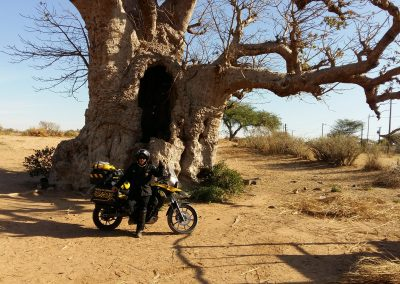 First Baobab tree coming from the desert