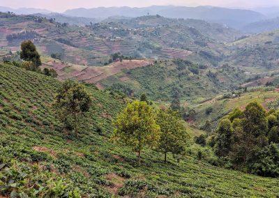 Bwindi Valley