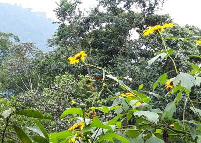 Bwindi flower Trees