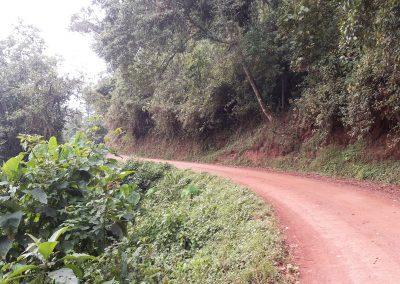 Bwindi tracks