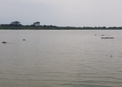 Hipopotamus QENP