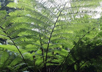 Massive Ferns