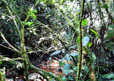 Rain Forest Bwindi
