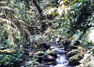 Water Stream Bwindi